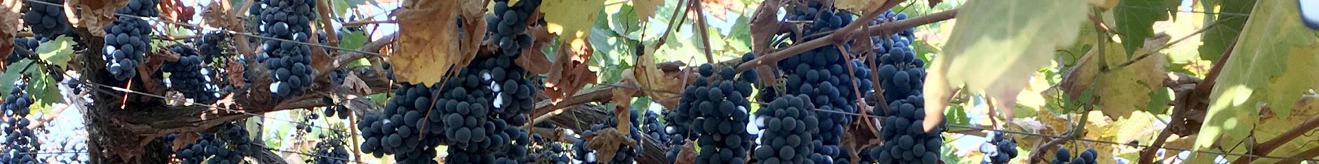 Tandem Process Partner - Vigne