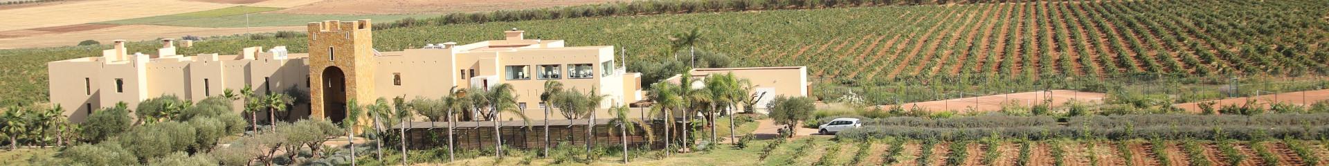 Tandem Process Partner - Vue vignoble au Maroc